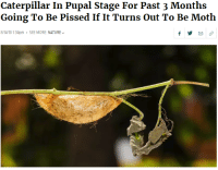 me irl: Caterpillar In Pupal Stage For Past 3 Months  Going To Be Pissed If It Turns Out To Be Moth  8/14/18 1:34pm SEE MORE: NATURE me irl