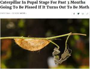 me irl by Pardusco MORE MEMES: Caterpillar In Pupal Stage For Past 3 Months  Going To Be Pissed If It Turns Out To Be Moth  8/14/18 1:34pm SEE MORE: NATURE me irl by Pardusco MORE MEMES