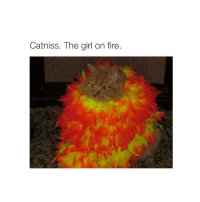 Fire, Girls, and Girl: Catniss. The girl on fire. i wonder how many people enjoy my account