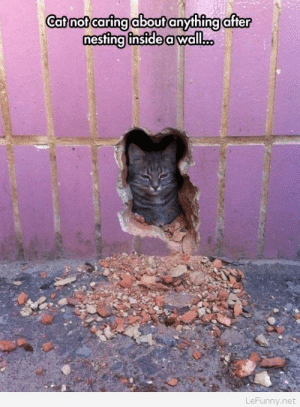 Funny, Net, and Cat: Catnot caring about anything after  estina inside a wall...  LeFunny.net Funny cat in hole