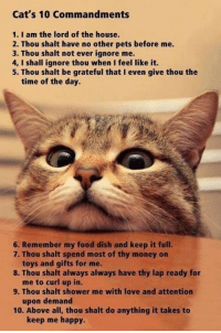 Memes, Shower, and Dish: Cat's 10 Commandments  1. I am the lord of the house.  2. Thou shalt have no other pets before me.  3. Thou shalt not ever ignore me.  4, I shall ignore thou when I feel like it.  5. Thou shalt be grateful that I even give thou the  time of the day.  6. Remember my food dish and keep it full.  7. Thou shalt spend most of thy money on  toys and gifts for me.  8. Thou shalt always always have thy lap ready for  me to curl up in.  9. Thou shalt shower me with love and attention  upon demand  10. Above all, thou shalt do anything it takes to  keep me happy. What Catmandments did they forget?