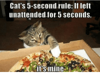CAT Planet: Cat's 5-second rule: If left  unattended for b Seconds,  It's mine CAT Planet