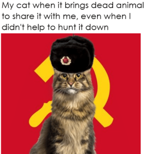 Cats are evil communists: Cats are evil communists