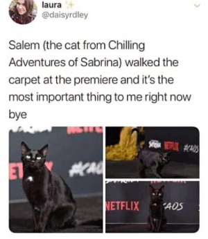 Cats are so god damn full of themselves, I swear their natural setting is a red carpet: Cats are so god damn full of themselves, I swear their natural setting is a red carpet