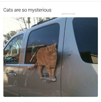 Cats are so mysterious  @hilarious ted 1. My cats aren't allowed outside 2. Spelling is important 3. me 4. Blinking white guy as an example 5. Rome is overrated 6. I'm always it cause I'm slow -Ben