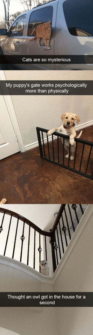 animalsnaps:Animal snaps: Cats are so mysterious   My puppy's gate works psychologically  more than physically   Thought an owl got in the house for a  second animalsnaps:Animal snaps