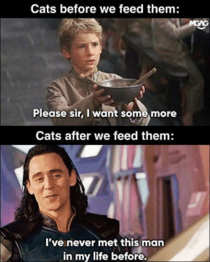 I Want Some: Cats before we feed them:  Please sir, I want some more  Cats after we feed them  I've never met this man  in my life before.