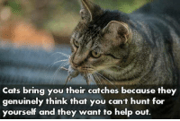 Cats, Help, and Think: Cats bring you their catches because they  genuinely think that you can't hunt for  yourself and they want to help out. 50 failed attempts