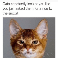 Memes, 🤖, and Peanut Butter: Cats constantly look at you like  you just asked them for a ride to  the airport This is why cats are the worst. Give me a dog with a huge smile on it's face that is willing to lick peanut butter off my testicles ANY DAY. (@thatramosgirl on the Twitter)