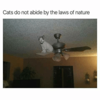 abide: Cats do not abide by the laws of nature