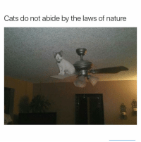 Funny, Cat, and Law: Cats do not abide by the laws of nature Not at all | More 👉 @miinute
