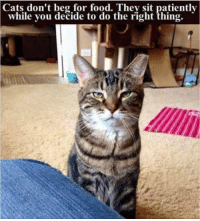 Do the Right Thing: Cats  don't beg for food. They sit patiently  while you decide to do the right thing.