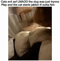 Cats, Chill, and Funny: Cats evil asf LMAOO the dog was just trynna  Play and the cat starts jabbin tf outta him That cat needs to chill 😂