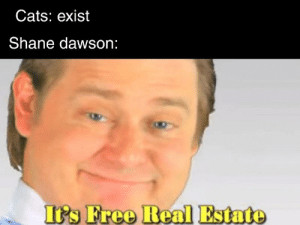 Totaly a lot of effort...: Cats: exist  Shane dawson:  Ifs Freo Real Estate Totaly a lot of effort...