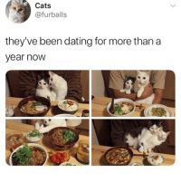 Af, Cats, and Dating: Cats  @furballs  they've been dating for more than a  year nowW 🤣😍Cute AF