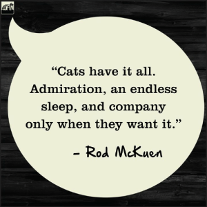 """Cats 🐱 have it all. How did you celebrate National Cat Day?  ⠀⠀⠀⠀⠀ ⠀⠀⠀⠀⠀ ⠀⠀⠀⠀⠀  #Redbarnfamily #nationalcatday #Cat: """"Cats have it all.  Admiration, an endless  sleep, and company  only when they want it.""""  - Rod McKuen Cats 🐱 have it all. How did you celebrate National Cat Day?  ⠀⠀⠀⠀⠀ ⠀⠀⠀⠀⠀ ⠀⠀⠀⠀⠀  #Redbarnfamily #nationalcatday #Cat"""