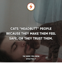"Any cat lovers here?: CATS ""HEADBUTT"" PEOPLE  BECAUSE THEY MAKE THEM FEEL  SAFE, OR THEY TRUST THEM  THE MORE YOU KNOW  @FACT BOLT Any cat lovers here?"