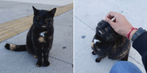 Cats in Greece may not look so friendly, but they are always ready for some affection.: Cats in Greece may not look so friendly, but they are always ready for some affection.