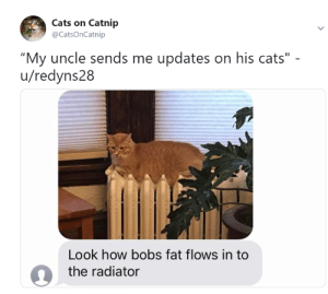 "Cats, Memes, and Fat: Cats on Catnip  @CatsOnCatnip  ""My uncle sends me updates on his cats""  u/redyns28  Look how bobs fat flows in to  the radiator"
