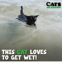 Nathan loves the water!: CATS  ON CATNIP  THIS CAT LOVES  TO GET WET Nathan loves the water!