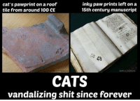 Anaconda, Cats, and Memes: cat's pawprint on a roof  tile from around 100 CE  inky paw prints left on a  15th century manuscript  CITY MUSEUM  EMIR O. FLIPOVİC  CATS  vandalizing shit since forever