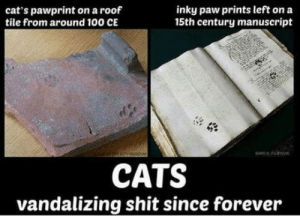 Anaconda, Cats, and Shit: cat's pawprint on a roof  tile from around 100 CE  inky paw prints left on a  15th century manuscript  CATS  vandalizing shit since forever Cats Vandalising Since Forever
