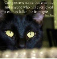 Love, Memes, and Magic: Cats possess numerous charms,  and anyone who has ever loved  a cat has fallen for its magic. (Sakari)