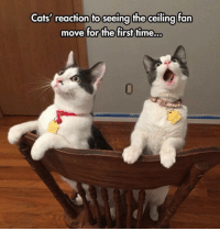 Cats, Grumpy Cat, and Time: Cats' reaction to seeing the ceiling fan  move for the first time. 😲😲