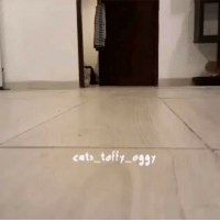 Kitties, Memes, and 🤖: cats toffy oggy Go kitty go! 🐱 Video by: @cats_toffy_oggy Like & Follow 👇 👇 👇 @tinyanmls