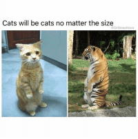 Cats, Memes, and Savage: Cats will be cats no matter the size  @DrSmashlove This is the look u make when u at the freezer and u reach for the box of Nestle Drumsticks and the box is empty and it dawns on u that someone took the last Drumstick but left the box there like a savage SomebodyGottaDieForThis 😂😂😂