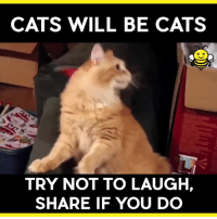 laugh: CATS WILL BE CATS  TRY NOT TO LAUGH,  SHARE IF YOU DO