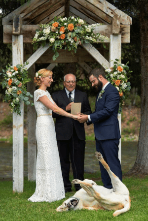 Facebook, News, and Photobomb: catsbeaversandducks:  An Illinois couple recently tied the knot, but not before their Labrador Retriever, Boone, was able to pull off a legendary photobomb.Via NEWS CENTER Maine