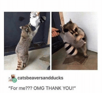 "Omg, Thank You, and You: catsbeaversandducks  ""For me??? OMG THANK YOU!"""