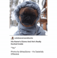"""Hell, Trendy, and Photos: catsbeaversandducks  His Name's Gizmo And He's Really  Excited Inside  """"Yay  Photos by OHeyGizmo Via Tastefully  Offensive Fine as hell@😍"""
