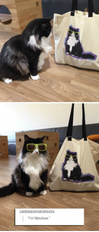 "<p>The Same Pair Of Sunnies.</p>: catsbeaversandducks  ""I'm fabulous."" <p>The Same Pair Of Sunnies.</p>"