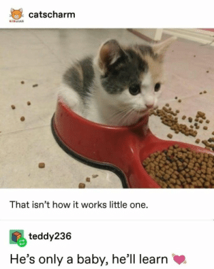 16 Animal Tumblr Posts That Are, Quite Simply, Very Cute: catscharm  KTSRAN  That isn't how it works little one.  teddy236  He's only a baby, he'll learn 16 Animal Tumblr Posts That Are, Quite Simply, Very Cute