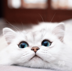 Hungry, Instagram, and Target: CATSOFINSTAGRAM.COM  ATSOFINSTAGRAM justcatposts: When she whispers those three special words: are you hungry? via@littlelordreginald