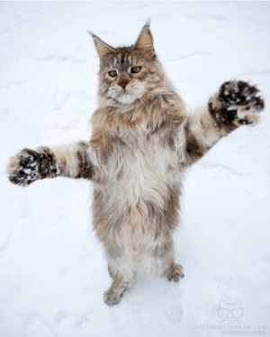 I love you this much: CATSOFINSTAGRAM.COM  I love you this much