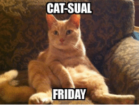 Who doesn't love a good pun, especially when it's related to a Friday! Have a wonderful weekend everyone. :): CATSUAL  FRIDAY Who doesn't love a good pun, especially when it's related to a Friday! Have a wonderful weekend everyone. :)