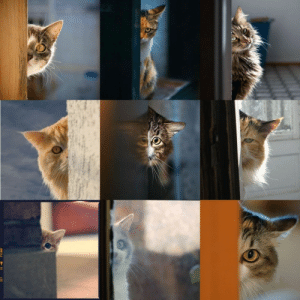 catsuggest: methuss:  I am always watching you  so beware ! : catsuggest: methuss:  I am always watching you  so beware !