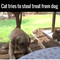 Nothing say OWW like a paw waggle 🐕🐈: Cattries to steal treat from dog Nothing say OWW like a paw waggle 🐕🐈
