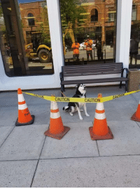 Tumblr, Blog, and Http: CAUTION  CURO  CAUTION disgustinganimals:  necro-om-nom-nomicon:  doggosource: what he do he knows what he did!  reblog if you know what he did