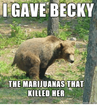 Confession Bear: CAVE BECKY  THE MARIJUANAS THAT  KILLED HER  made  on inngur Confession Bear