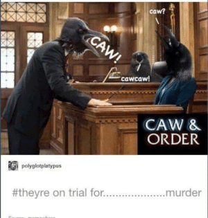 Sure hope they have probable caws: caw?  cawcaw  CAW &  ORDER  plyglotplatypus  #theyre on trial for  murder Sure hope they have probable caws