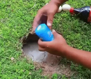 cawareyoudoin: 1234timewar:  allsadnshit:  naidje: alchemy what does this mean   #oh i can explain this!#basically the hole is next to a body of water and is dug down to connect to it#they crack the egg in to attract the fish#then when they pour the coke in it reacts with the mentos and makes carbon dioxide#which makes the fish unable to breathe#so they swim forward to try to get to different water#but forward for them is out of the hole#so thats why they swim up onto land  Stumbledeggs knows what's up!   The modern kind of fishing. : cawareyoudoin: 1234timewar:  allsadnshit:  naidje: alchemy what does this mean   #oh i can explain this!#basically the hole is next to a body of water and is dug down to connect to it#they crack the egg in to attract the fish#then when they pour the coke in it reacts with the mentos and makes carbon dioxide#which makes the fish unable to breathe#so they swim forward to try to get to different water#but forward for them is out of the hole#so thats why they swim up onto land  Stumbledeggs knows what's up!   The modern kind of fishing.