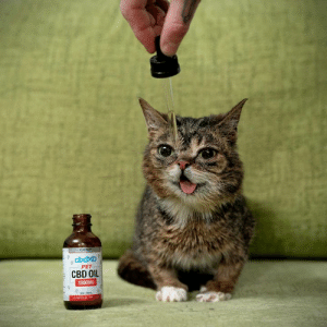 BUB's making sure I get her CBD Oil dosage right. 10 drops with her food in the morning, and 10 drops at night. Learn more about cbdMD's CBD Oil for Pets, and get 20% off your first order with code BUB at www.cbdmd.com/bub: cbdMD  PET  CBD OIL  1500MG BUB's making sure I get her CBD Oil dosage right. 10 drops with her food in the morning, and 10 drops at night. Learn more about cbdMD's CBD Oil for Pets, and get 20% off your first order with code BUB at www.cbdmd.com/bub