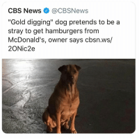 "*Should have tried this more often at the pizza shop in college*: CBS News@CBSNews  ""Gold digging"" dog pretends to be a  stray to get hamburgers from  McDonald's, owner says cbsn.ws/  2ONic2e *Should have tried this more often at the pizza shop in college*"