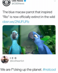 "Memes, News, and Cbs: CBS News  @CBSNews  The blue macaw parrot that inspired  ""Rio"" is now officially extinct in the wild  cbsn.ws/2NUFUFb  IC O  @icotheartizt  We are f*cking up the planet. We need to fix up"