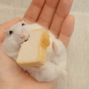 Cute, Tumblr, and Blog: ccrygirl:the little tail! the small bread! the tiny paws! such a cute squish!! TOO GOOD TO BE TRU !!!
