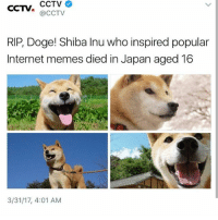 Doge, Internet, and Memes: CCTV.  CCTV  (CCTV  RIP, Doge! Shiba Inu who inspired popular  Internet memes died in Japan aged 16  3/31/17, 4:01 AM OH NOOOO
